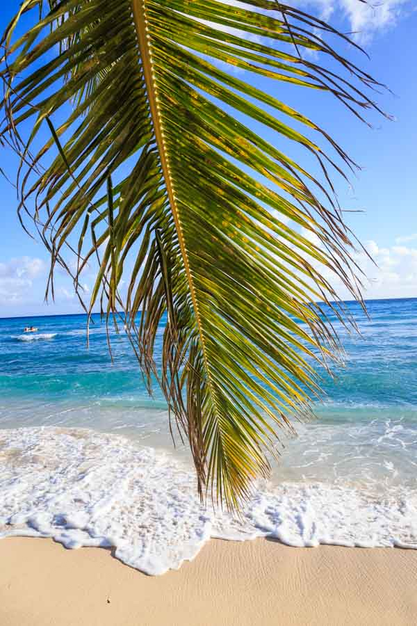 Palm leaf on the beach in Barbados
