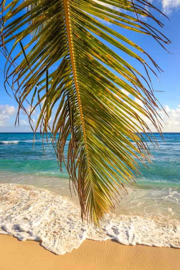 Palm leaf sand and sea in Barbados